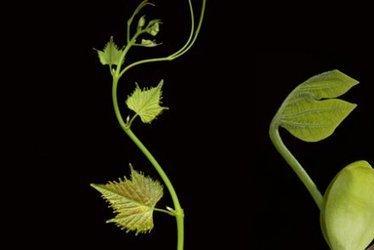 «Les plantes bougent, sentent et réagissent mais nous ne sommes pas capables de le voir» | Ca m'interpelle... | Scoop.it