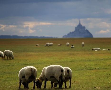 Breton ou normand, le Mont-Saint-Michel ? | COMMUNITY MANAGEMENT - CM2 | Scoop.it