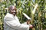 Kenya: Kari experts device plan to rid farms of lethal maize disease | MAIZE | Scoop.it