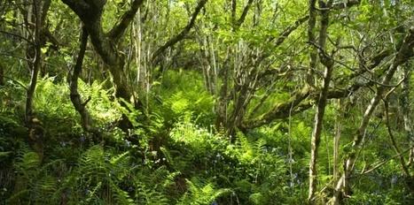 """Si je vous dis """"biodiversité"""", vous répondez... ? - Sciences et Avenir   L'actu du droit de l'environnement !   Scoop.it"""