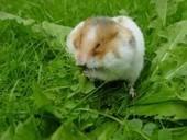 Mon rongeur se gratte ? - Blog de zoomalia.com | PETS & ANIMAUX | Scoop.it