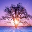 Seasonal Affective Disorder: Beyond the Winter Blues   Seasonal Affective Disorder Info   Scoop.it