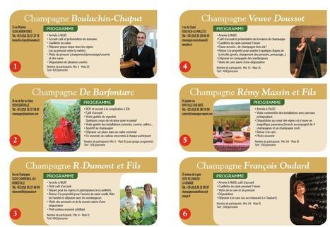 Devenez vendangeur d'un jour en Champagne | Actualité Aube Market | Scoop.it