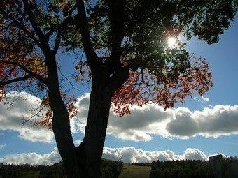 Our natural park is a treasure! | Ingelesa lantzeko baliabideak | Scoop.it