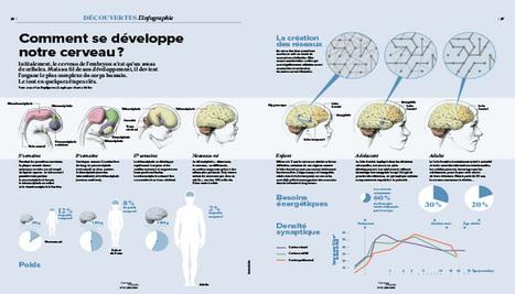 Comment se développe notre cerveau? [Infographie] | Sélection pour l'enseignement TERTIAIRE dans les voies générale, technologique et professionnelle | Scoop.it