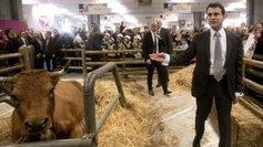 L'association corse U Levante critique Manuel Valls - France 3 Corse ViaStella | Ambiante | Scoop.it