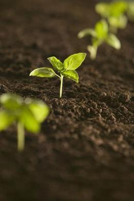 N.C. agribusiness sprouting higher, study finds | North Carolina Agriculture | Scoop.it