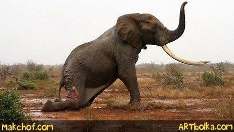 مسعفون يساعدون فيلا على استعادة الحياة ..#فيديو مؤثر | مكشوف | Scoop.it