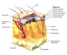 Hair Loss   Hair Loss Causes   Medicine to Stop Hair Fall-Majitrich   Hair Loss   Scoop.it