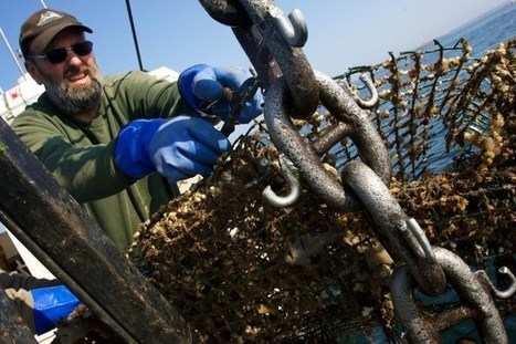 Feds: Maine behind only Alaska for fisheries landings value - Bangor Daily News | Aquaculture Directory | Scoop.it