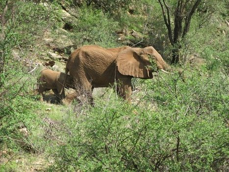Elephant calf devoted to dying mother | The Fight for Elephant & Rhino Survival | Scoop.it