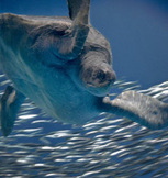 Live HD Web Cam of the Open Sea Exhibit at the Monterey Bay Aquarium | Education 230 | Scoop.it