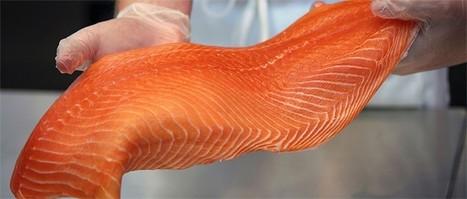 Fish Company - Fresh Fish South Florida - Fish company Florida   The Fish Company   Scoop.it