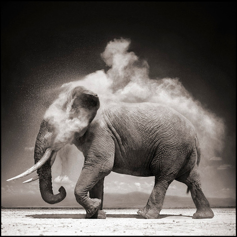 Nick Brandt photographie les animaux africains, l'esthétisme contre la barbarie | Scoop Photography | Scoop.it