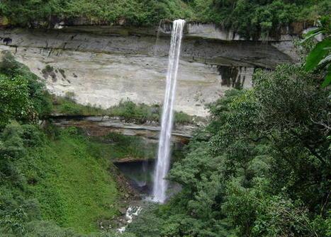 17 marzo 2011 12:33:00 Denuncian la tala de árboles en Amazonía cien años después del auge del caucho / Noticias / Contenidos / Inicio - EFE Verde   LA DESFORESTACION DE ARBOLES   Scoop.it