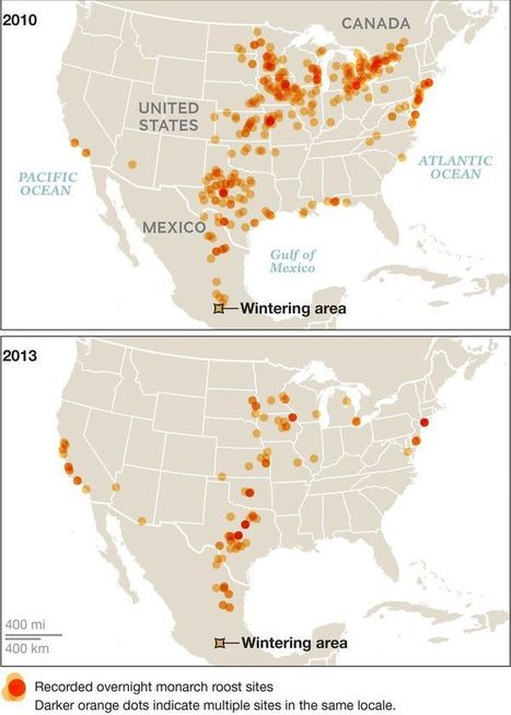 BIODIVERSITY: Imperiled Monarch Butterflies Get $3.2 Million From U.S. Government | > Animal Welfare | Scoop.it