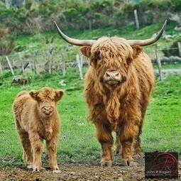 To what animal evolved from the cow? | onlinepetanswers | Scoop.it