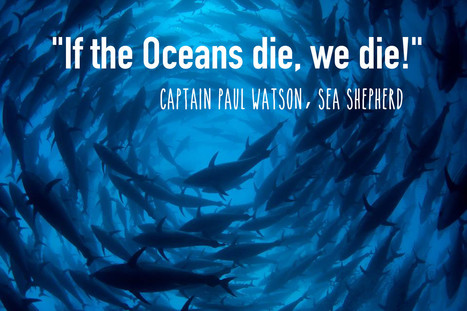 Beyond #WhaleWars: Inside #SeaShepherd's Global Movement #Defending #Diversity in the #Oceans | Rescue our Ocean's & it's species from Man's Pollution! | Scoop.it