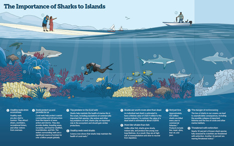 #Protecting #Sharks in the #Pacific ~ every species,including us, need a #healthyOcean ! | Fish Habitat | Scoop.it