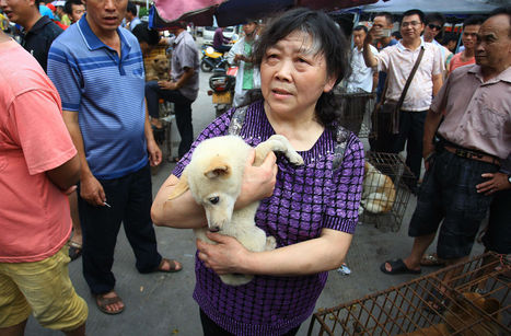 Dog-eating festival in China hounded by activists | johnson geo 152 | Scoop.it