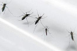 Retour de la dengue : appel à la vigilance - Guyane Santé Info | EntomoNews | Scoop.it