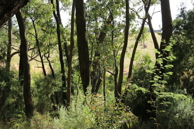 Edward Hunter Heritage Bush Reserve, Moe, Victoria | Australian Plants on the Web | Scoop.it
