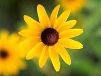 Fibonacci Numbers in Nature | Algorithm | Scoop.it