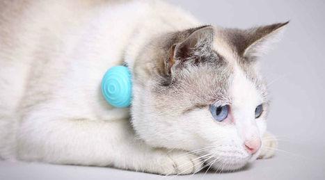Résultat de sondage: souhaitez-vous connecter votre animal? | Quantified Pet | Scoop.it