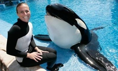 SeaWorld's 'humane' regime turned captive whale Tilikum into killer, claims documentary | Dolphins | Scoop.it