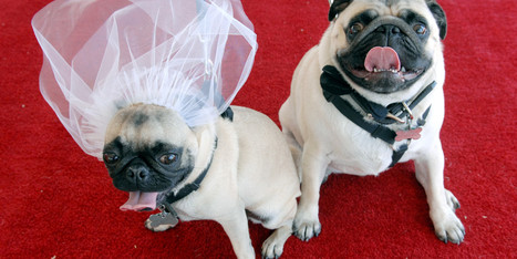 10 Wedding World Records That Are Nothing Short Of Amazing   Weddings   Scoop.it