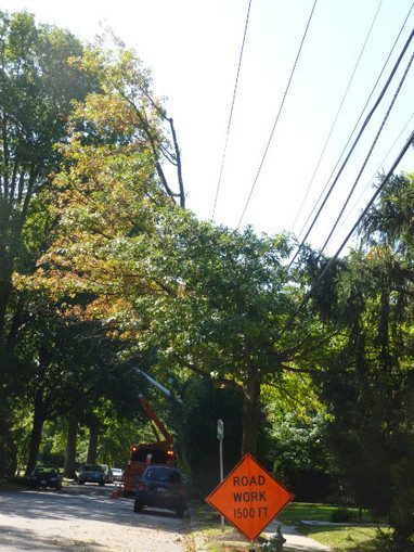 Pepco's Tree Pruners Are Coming | Forest Hills Connection | E ... | DC Council Government Operations | Scoop.it