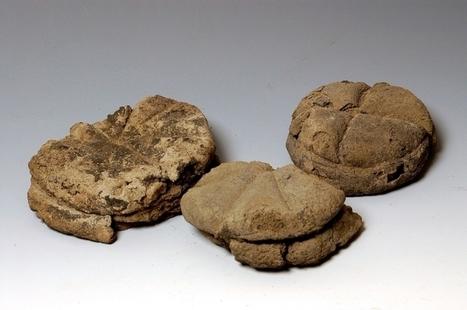 Nutrire l'Impero. Cosa mangiavano gli antichi Romani? La mostra dell'Ara Pacis di Roma tra plastici e cibo carbonizzato | LVDVS CHIRONIS 3.0 | Scoop.it