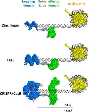 Synthetic epigenetics—towards intelligent control of epigenetic states and cell identity - Clinical Epigenetics | Epigenetics | Scoop.it
