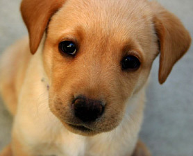 Dogs Probably Feel Sorry For Us : Discovery News   Empathy and Animals   Scoop.it