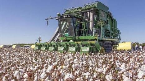 'Focus on cotton' webcasts address cures for sticky cotton | Western Farm Press | CALS in the News | Scoop.it
