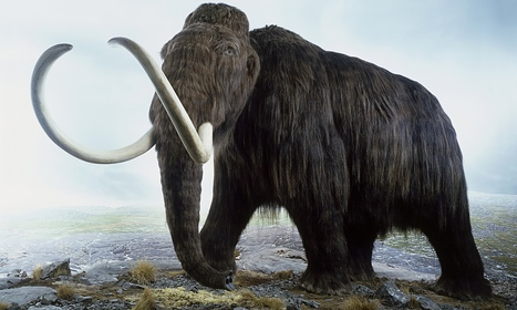 Neanderthals cleared of driving mammoths over cliff in mass slaughter | Mysteries of the Ancient World | Scoop.it