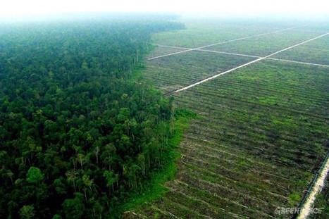 Comment manger sans huile de palme au supermarché ? - Néoplanète | Cosmétique - Bio - Well being | Scoop.it