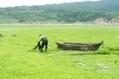 Les algues, ressources du futur - France Info | L'environnement en Bretagne | Scoop.it
