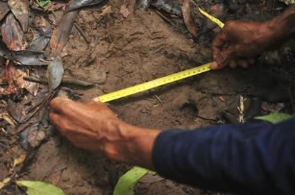 WWF Discovers Rare Sumatran Rhino Footprint In Borneo - Latinos Post | Rhino Poaching South Africa  & Accross the Globe | Scoop.it