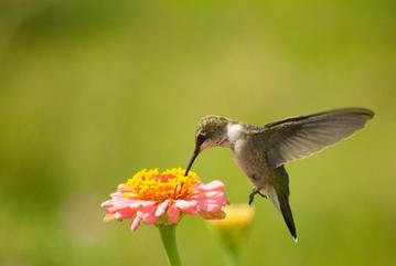 The Impact of Google Hummingbird on Online Reputation Management | Business 2 Community | SEO Buzz | Scoop.it