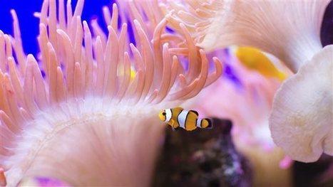 La biodiversité peu protégée dans les océans - Radio-Canada | biodiversité - ornithologie - biologie de la conservation | Scoop.it