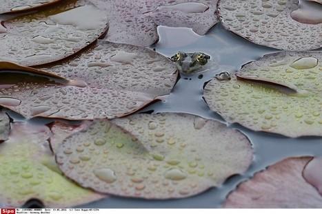 Ce week-end, c'est aussi la Fête des mares | Biodiversité | Scoop.it
