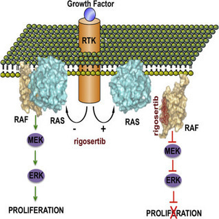A Small Molecule RAS-Mimetic Disrupts RAS Association with Effector Proteins to Block Signaling: Cell | Melanoma BRAF Inhibitors Review | Scoop.it