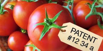 The Diligent Gardener: Monsanto Attempts to Patent Food | ExoticGardening | Scoop.it