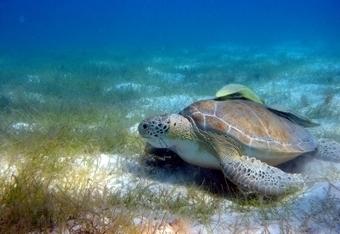 Biodiversidad Marina y Protección Costera - AIDA (Asociación Interamericana para la Defensa del Ambiente) | Biología marina y sus curiosidades | Scoop.it