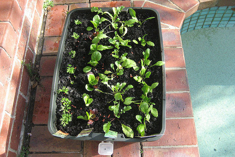 Growing plants from seeds | Australian Plants on the Web | Scoop.it