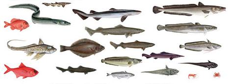 Pêche en eau profonde: les Etats membres de l'UE s'accordent pour baisser les quotas | Biodiversité & Relations Homme - Nature - Environnement : Un Scoop.it du Muséum de Toulouse | Scoop.it