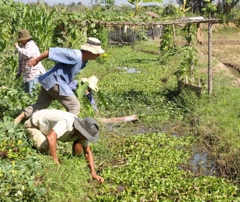 climate smart agriculture | Agriculture and Climate Change | Scoop.it