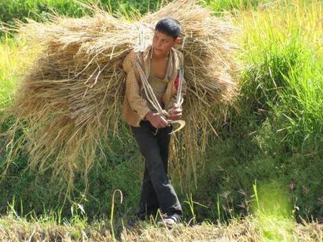 Le Bhoutan en voie d'être le premier pays 100% bio | Ca m'interpelle... | Scoop.it