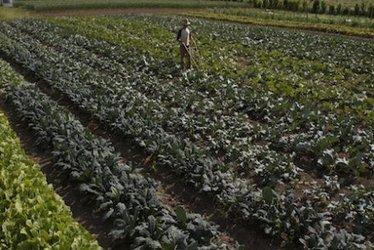 Bio et hyperproductive : la ferme magique d'un agriculteur québécois - Terra eco | Le BCC! Conso 2.0 - Cahier de tendances et avenir de la consommation | Scoop.it
